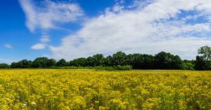 Allergien und Unverträglichkeiten erfolgreich mit der Naet Methode behandeln